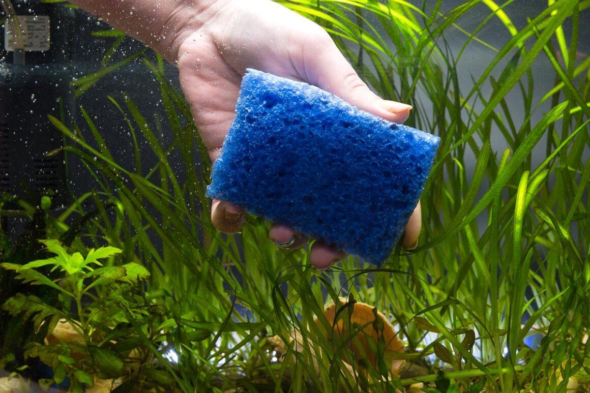 Nano Aquarium mit Schwamm reinigen