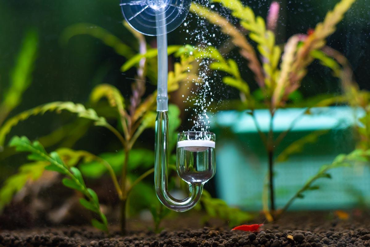 CO2 in Nano Aquarium