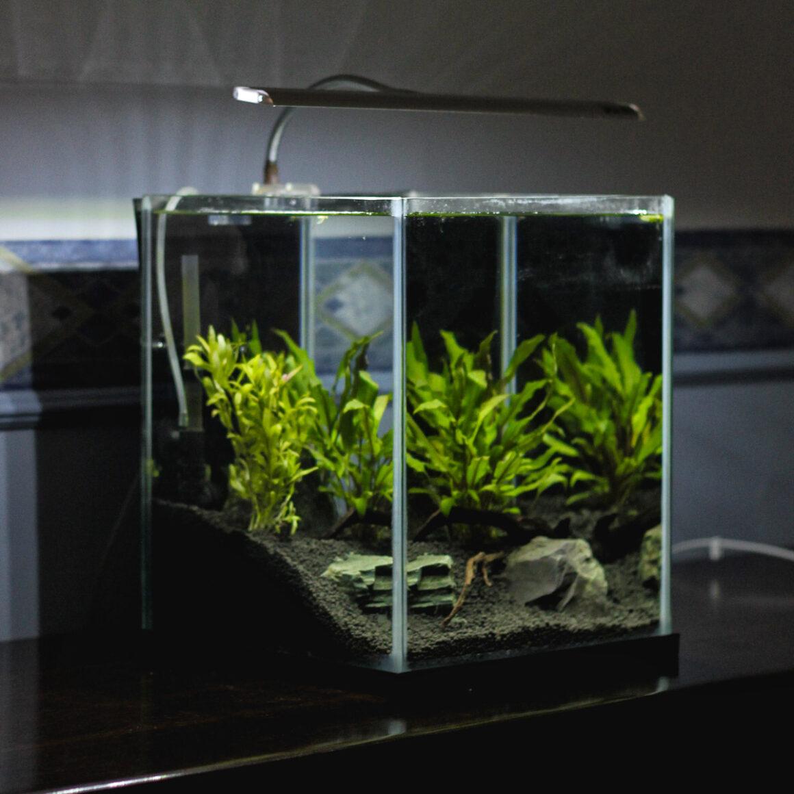 Nano Aquarium Größe