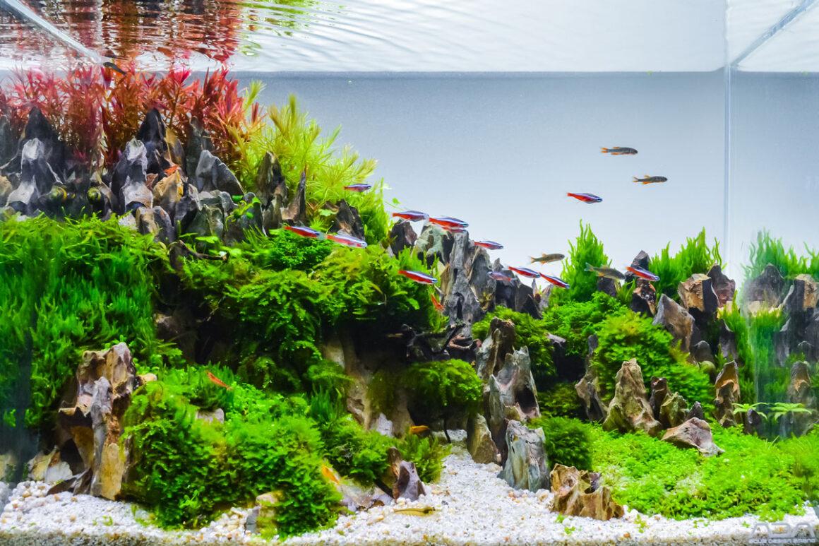 Nano Aquarium Einrichtungsbeispiele
