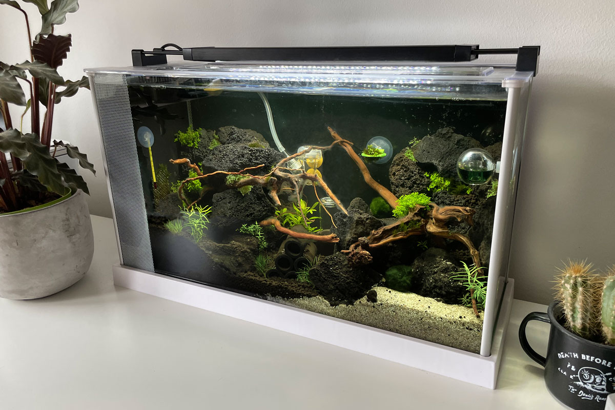 bestes nano aquarium