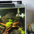 CO2 Dauertest Aquarium