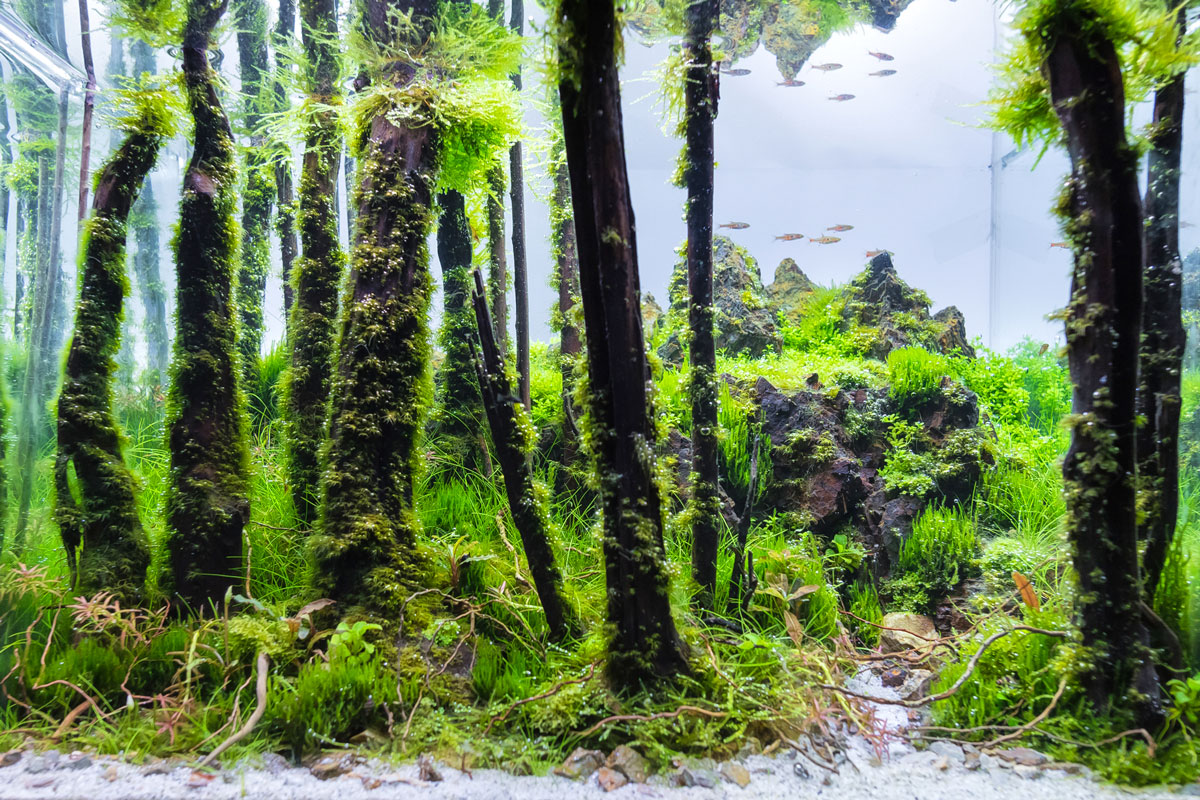 Nano Aquarium Einrichten Ideen