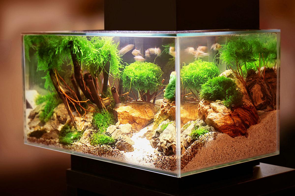 In 9 Schritten zum perfekten Nano Aquarium
