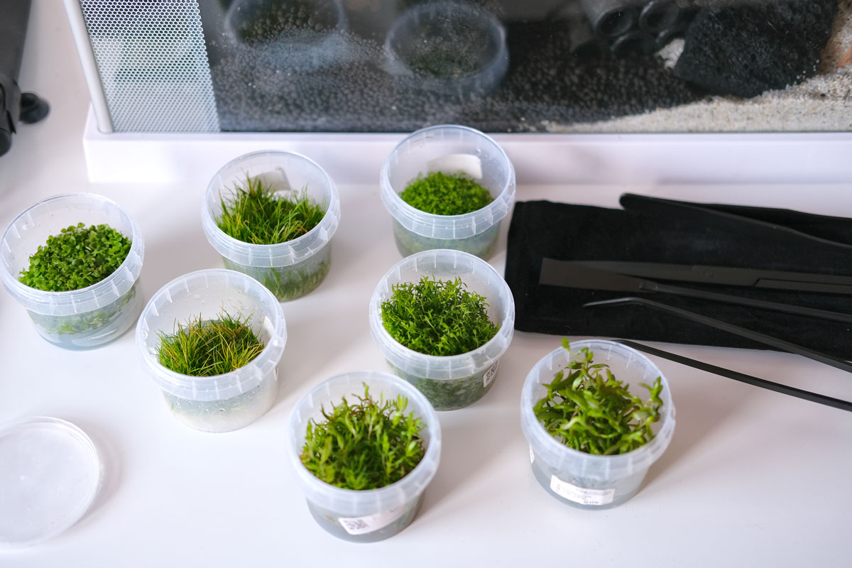 Pflanzen für Nano Aquarium