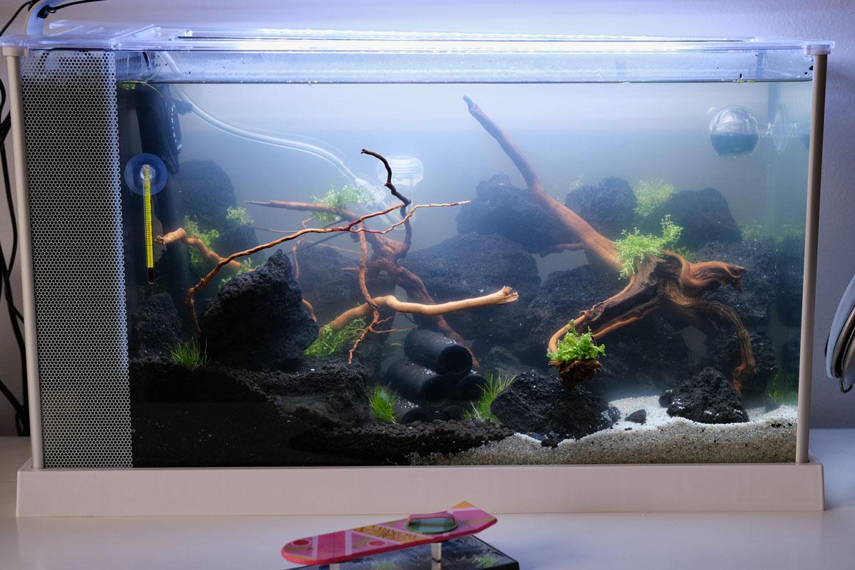 Aquarium Einfahrphase